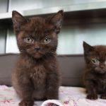 Ausgesetzte Katzenkinder (Foto: Tierheim Berlin)