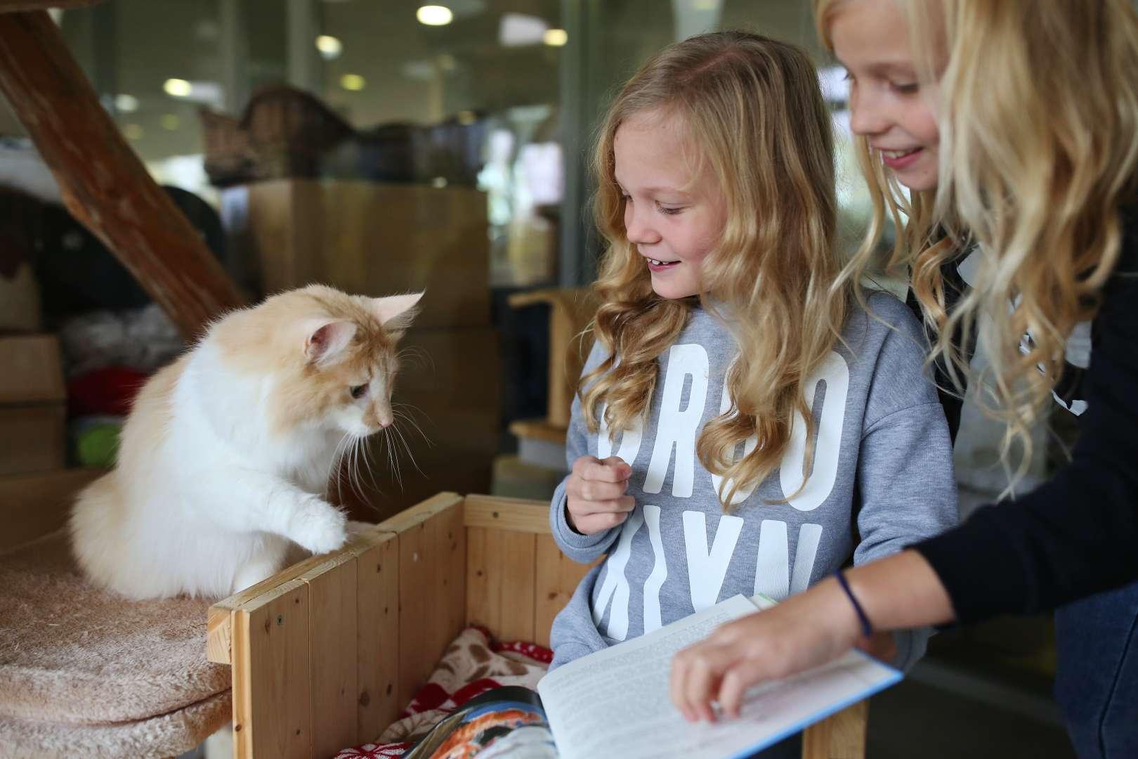 Projekt Kinder lesen Katzen vor