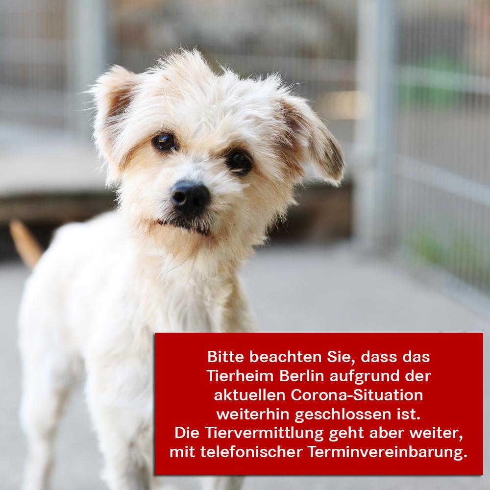 Website-Störer-Bild