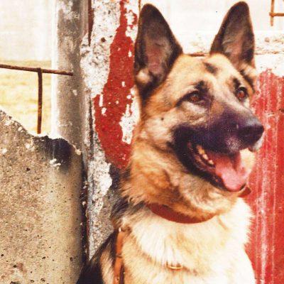 Mauerhund Schäferhund (Quelle: TVB)
