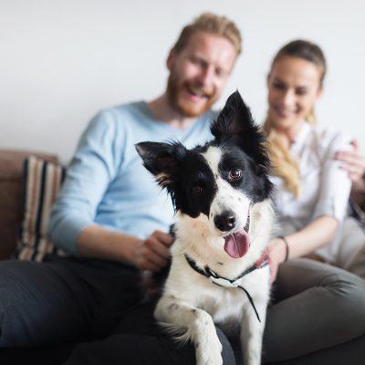 Paar mit Hund auf einem Sofa (Foto: Shutterstock)